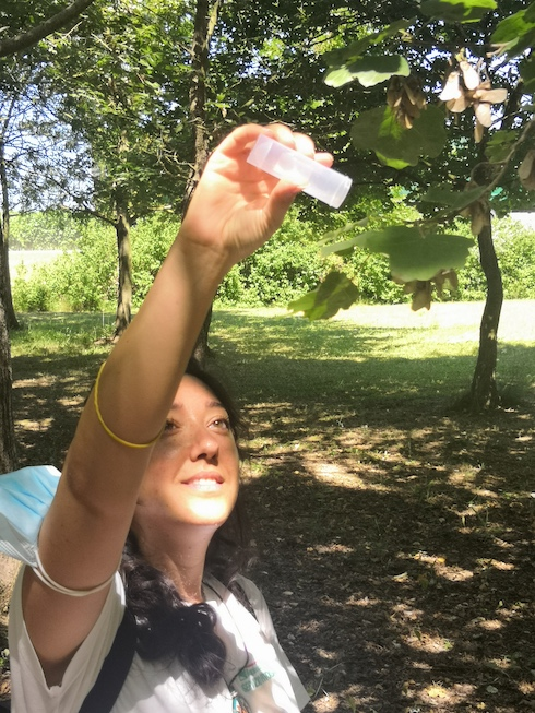 Lanci di vespa samura in Emilia-Romagna