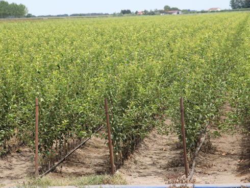 Vivai salvi stile italiano per natura agronotizie for Vivai piante