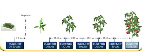 Programma di applicazioni di Eugenio su pomodoro