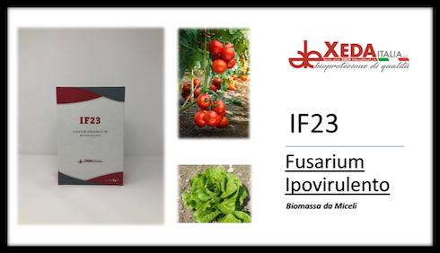 Fusarium ipovirulento IF23, Xeda