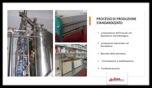 Processo di produzione standardizzato di Xeda
