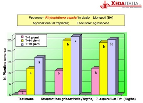 Xedavir: prove su peperone