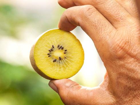 Kiwi giallo, frutto dell'actinidia prodotto dalla Jingold