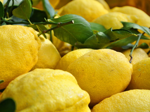Limoni campani della Costiera amalfitana prodotti dall'OP Costieragrumi
