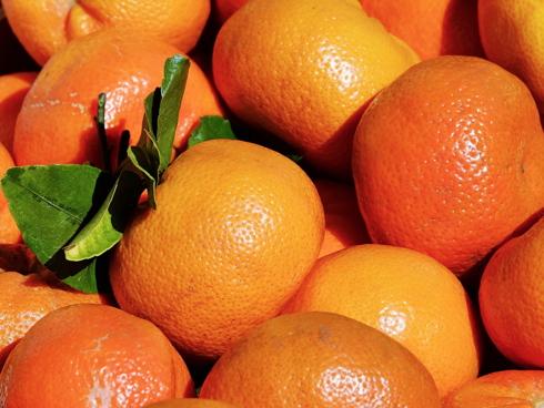 Clementine, pianta di agrume che produce clementino