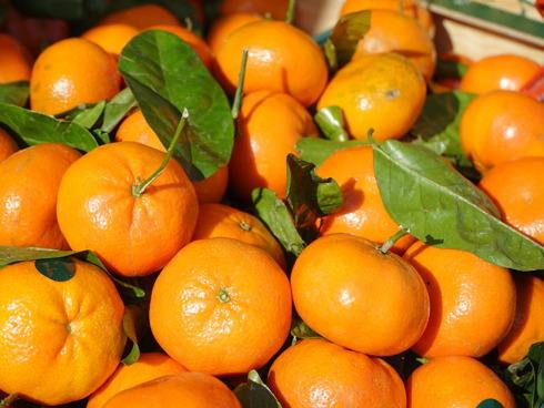 Mandarini all'interno di una cassetta da frutta