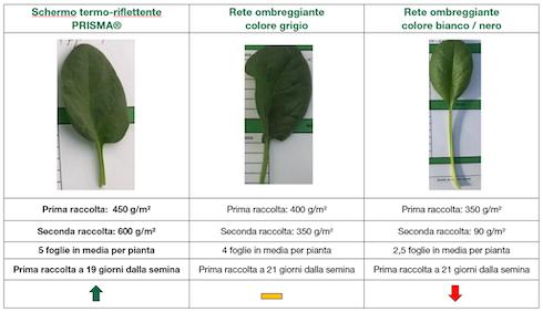 Rilevazioni quantitative test - Arrigoni