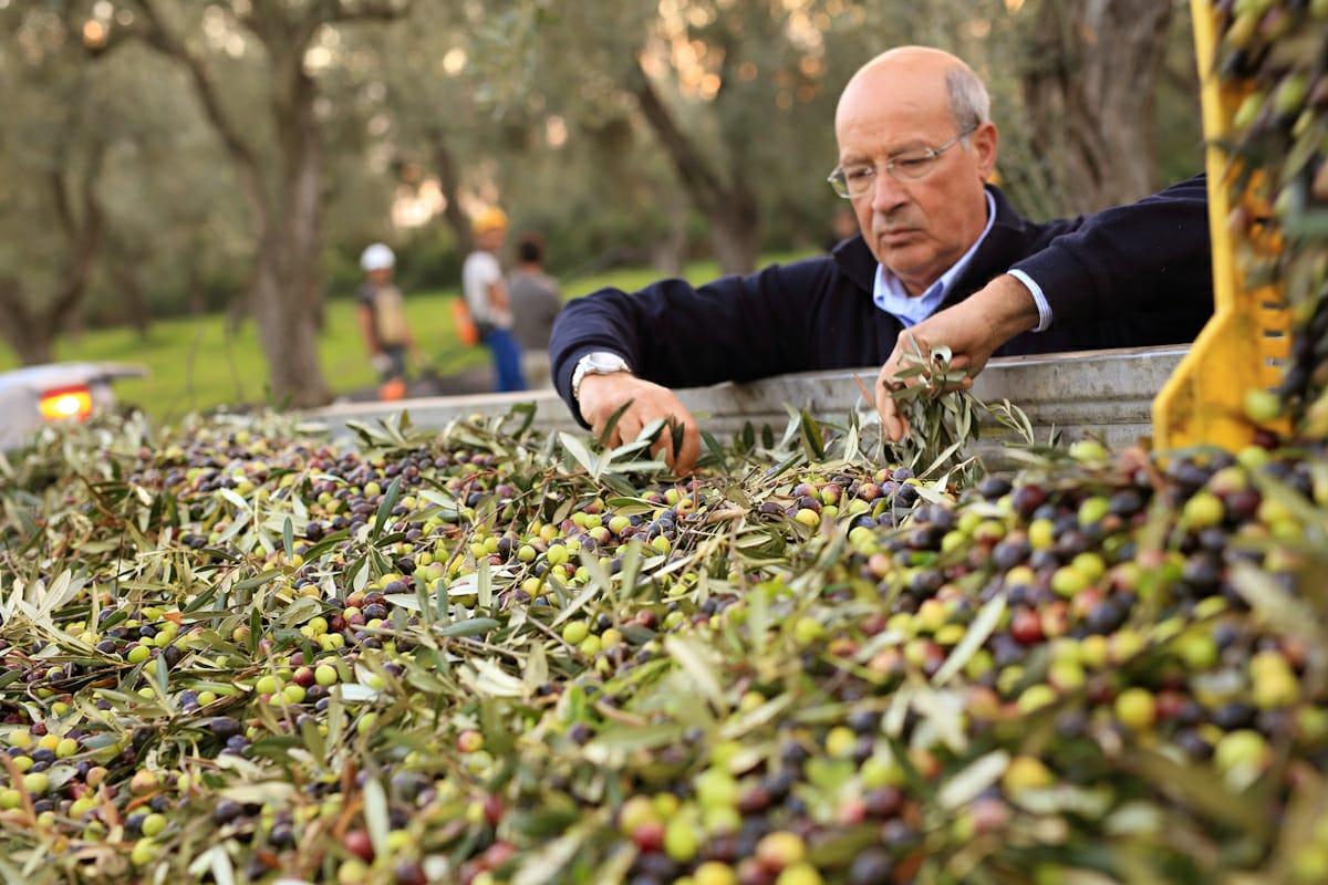 Giuseppe Fois, fondatore di Accademia Olearia