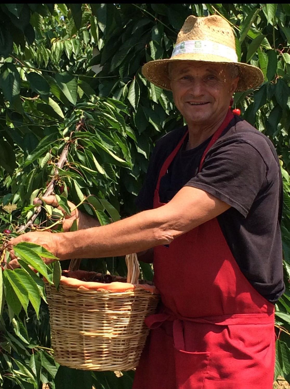 Nonno Emilio raccoglie le sue ciliegie di Vignola