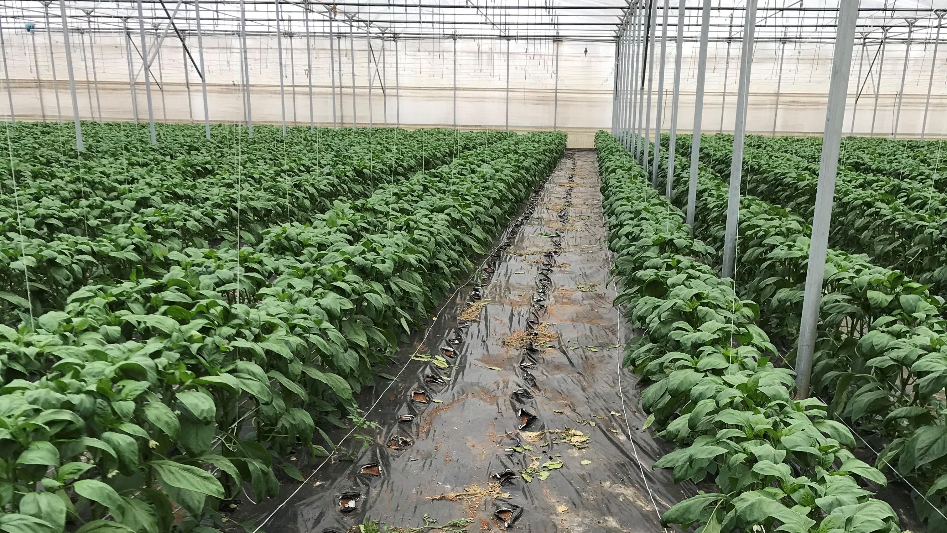 L'attenzione di Ioppì per la sostenibilità etica, economica e ambientale si riflette nelle scelte delle tecnologie per la coltivazione