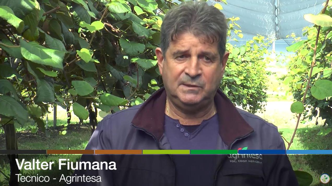 Valter Fiumana, tecnico di Agrintesa, intervistato da Plantgest
