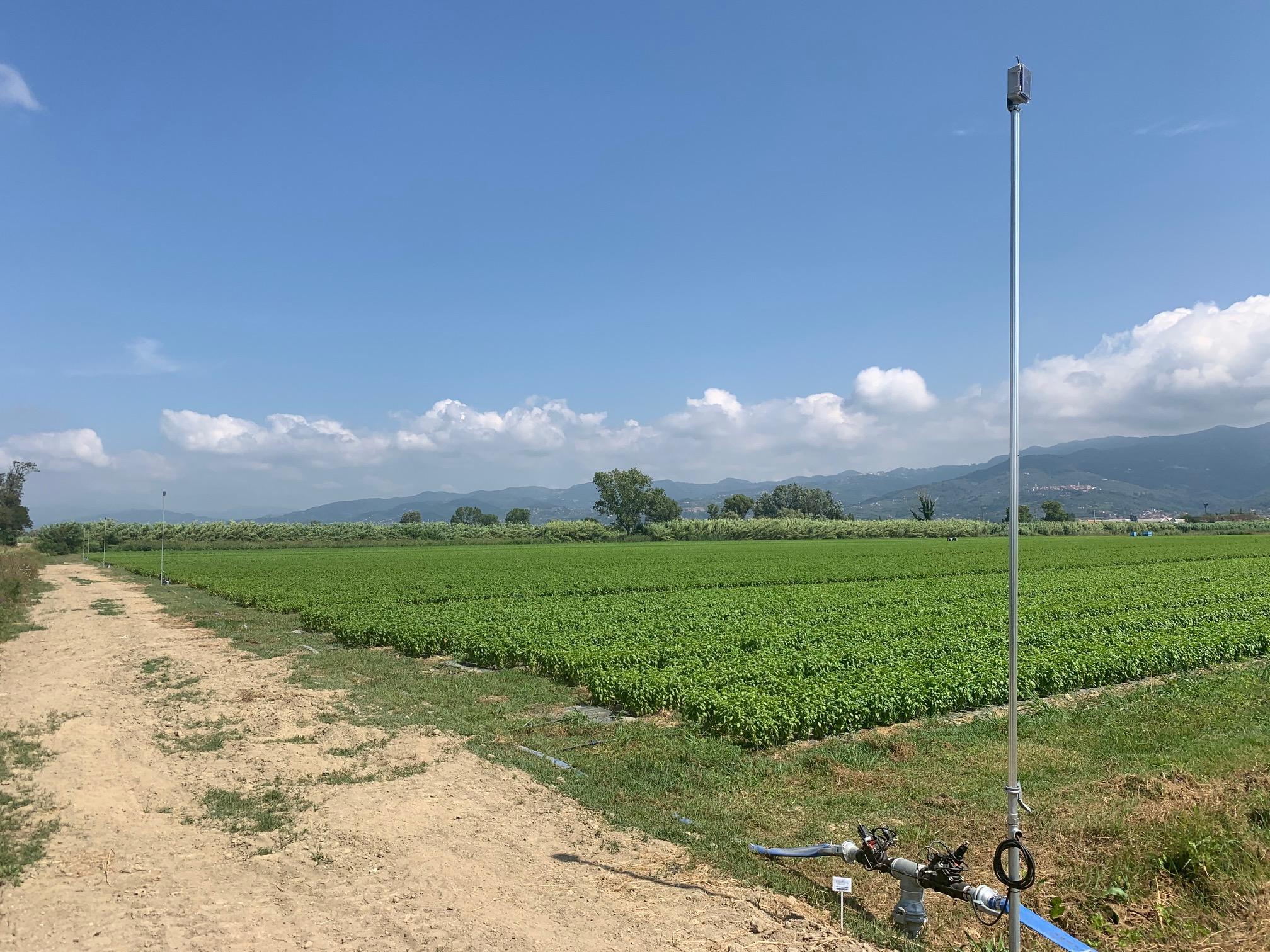 I campi dell'azienda Lune Verdi, coltivati con l'aiuto di QdC® - Quaderno di Campagna®
