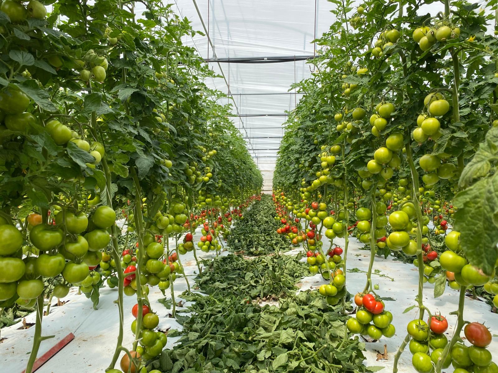 Con QdC è possibile garantire la rintracciabilità dei prodotti agricoli dal campo alla tavola