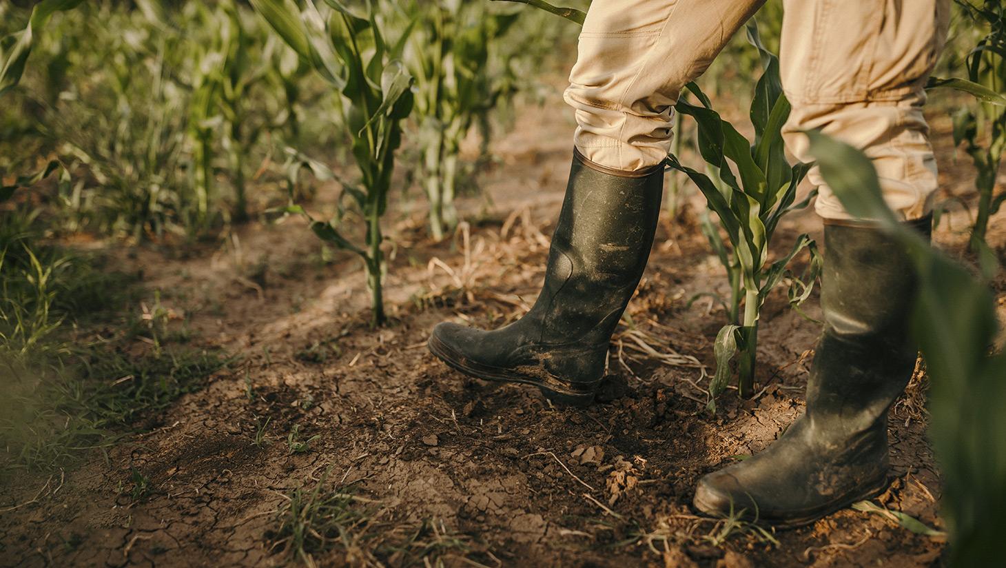 QdC Quaderno di Campagna è al fianco degli agricoltori. Ti aiutiamo a fare il quaderno di campagna senza errori con i controlli automatici