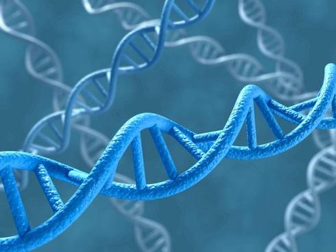 Immagine del DNA, il materiale genetico strutturato sulla base della doppia elica