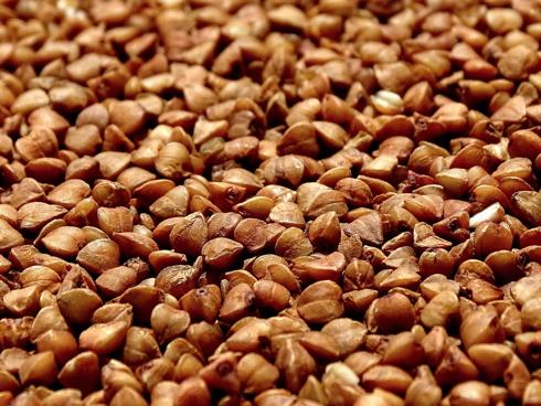Semi della pianta grano saraceno, erbacea ed estensiva