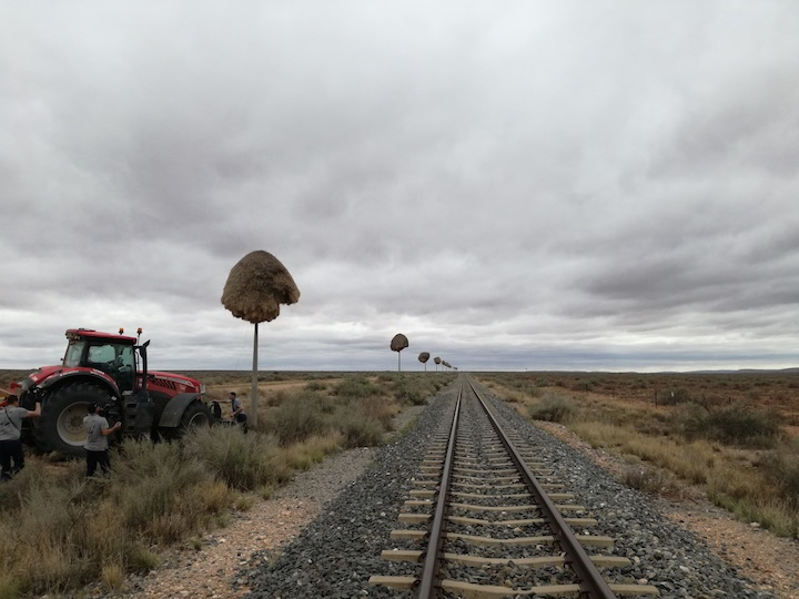 Nidi lungo la ferrovia da Prieska a Kakamas