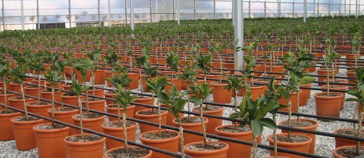 Irrigazione a goccia con ali gocciolanti normali di Irritec