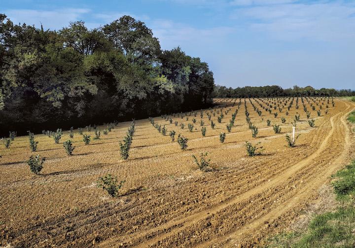 Coltivazione nocciolo in subirrigazione