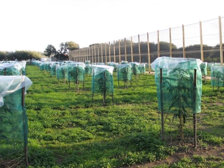 Irritec è tra i partner del progettoInnomam - Innovazione del mango in ambiente mediterraneo