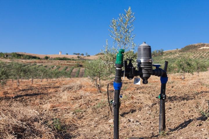 Impianto d'irrigazione Irritec in uliveto