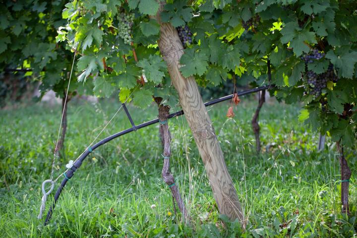 Il gocciolatore Multibar C è ideale per l'irrigazione del vigneto