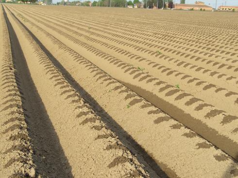 Netafim irrigazione a goccia i vantaggi su patata e for Sistema irrigazione a goccia