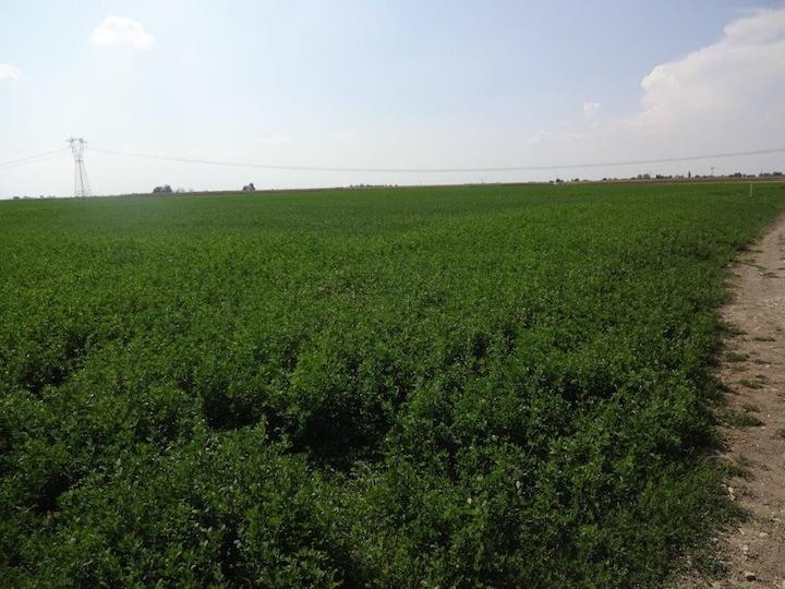 Irrigazione a goccia netafim per il medicaio agronotizie for Netafim irrigazione
