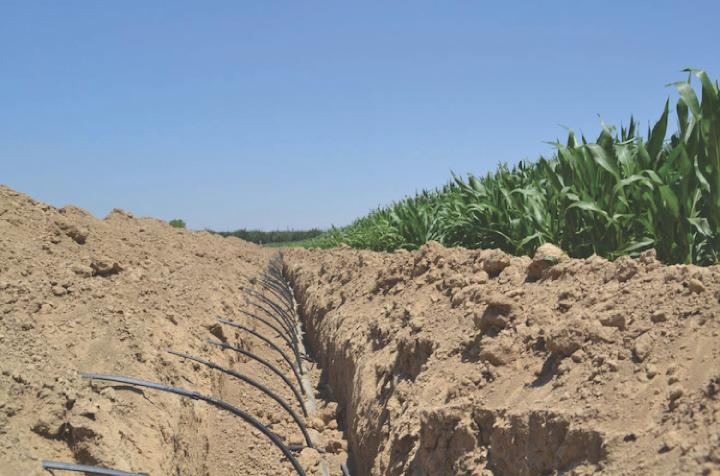 Un impianto di subirrigazione con tecnologia Netafim