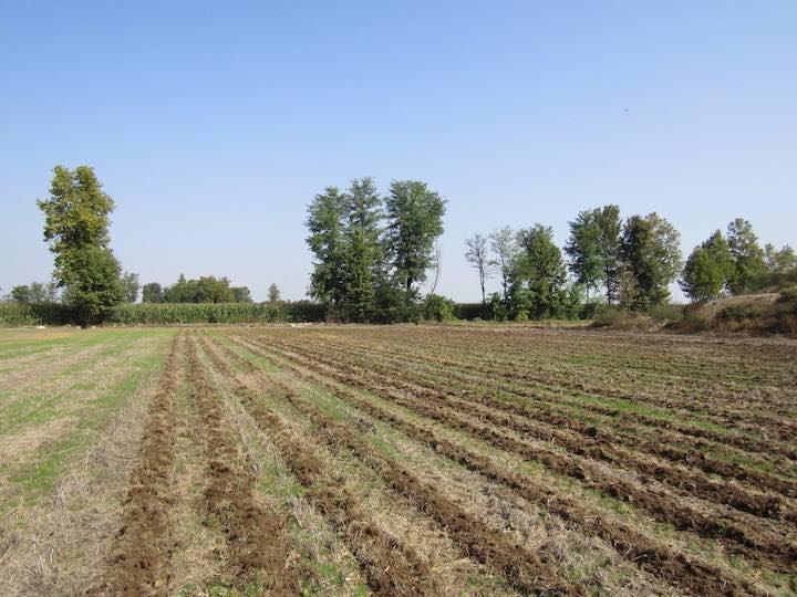 La lavorazione a strisce apporta diversi vantaggi agronomici al suolo
