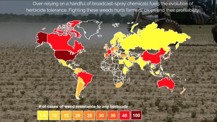 In rosso le aree dove la resistenza agli erbicidi é più elevata