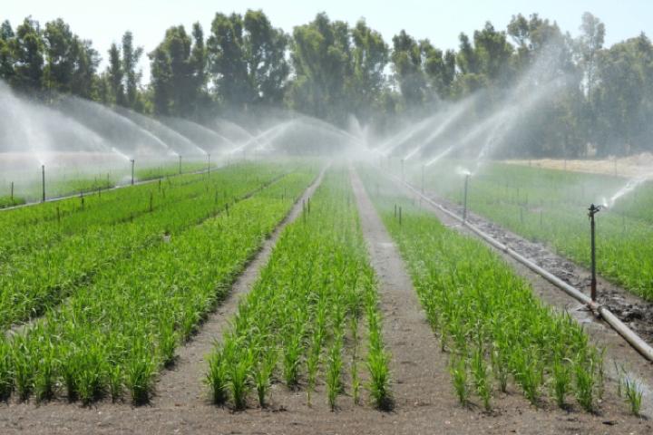 Prove di irrigazione per aspersione