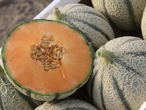 Melone della tipologia Charentais e prodotto dall'azienda Enza Zaden