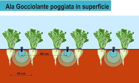 Barbabietola da zucchero l 39 irrigazione a goccia secondo for Microirrigazione orto
