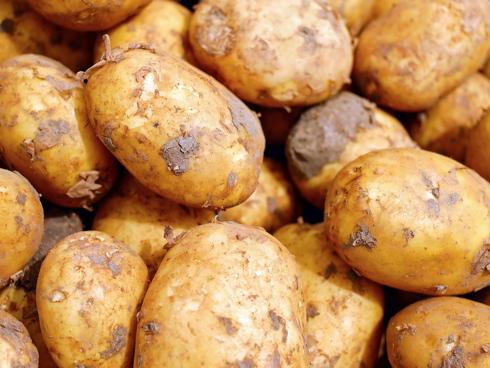Patate appena raccolte e sporche di terra