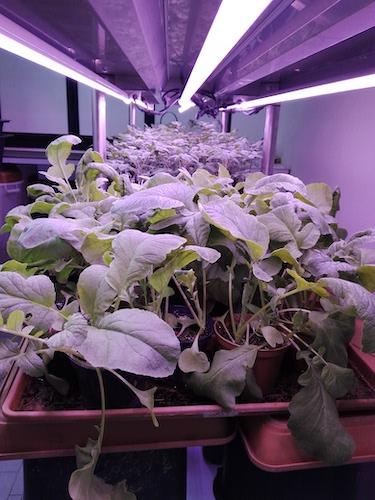 Corso di laurea magistrale Sostenibilità integrata dei sistemi agricoli