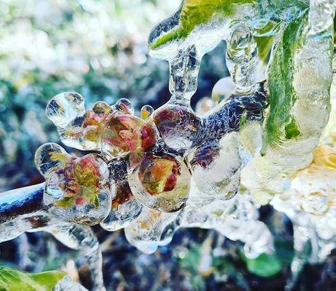 Gelo in Emilia-Romagna